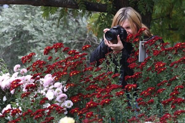 В Крыму проходит бал хризантем