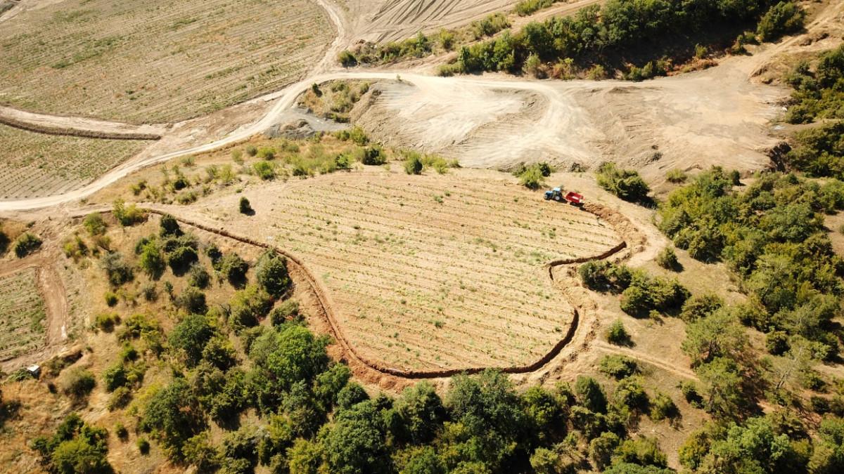 Возрождая традиции XIII века: уникальный винный парк откроют в Крыму