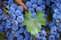 Фестиваль вина и гастрономии #Ноябрьфест  - в тройке лучших осенних праздников виноделия