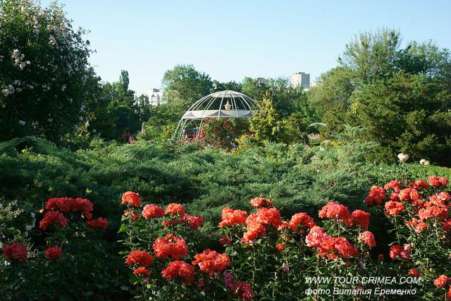 Розарий Воронцовского парка (Салгирка) в Симферополе. Как прекрасны летние вечера в Крыму!