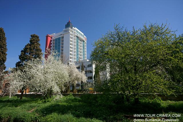 В крымских дворах цветет и пахнет слива.