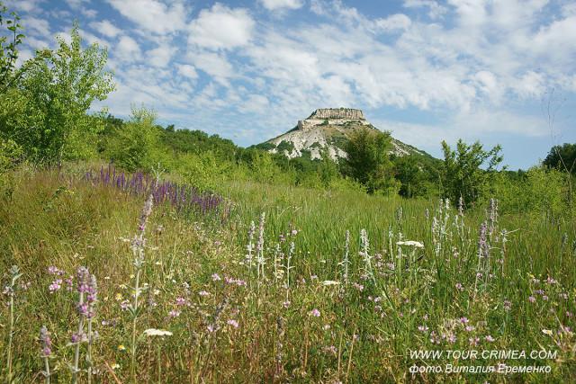 Июнь в Крыму - благодатное время цветущего разнотравья и сбора лекарственных трав.