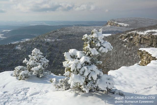 Крымский можжевельник зимой - словно маленькая елочка!