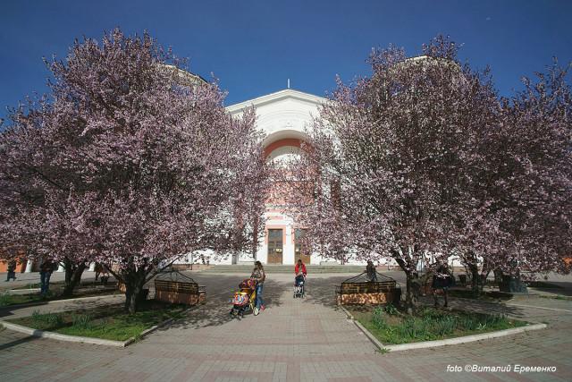 В центре Симферополя в апреле фантастически цветет слива!