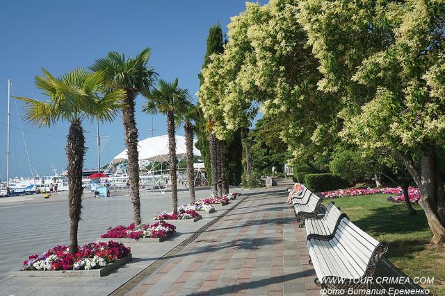 Новая пальмовая аллея на набережной Ялты