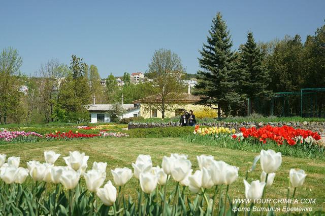 Цветущие тюльпаны у усадьбы Палласа в Воронцовском парке Симферополя