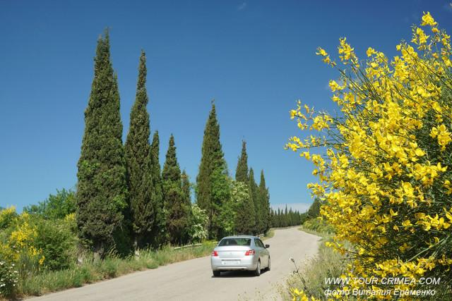 В Крыму благоухает и цветет испанский дрок. Очень скоро придет лето!