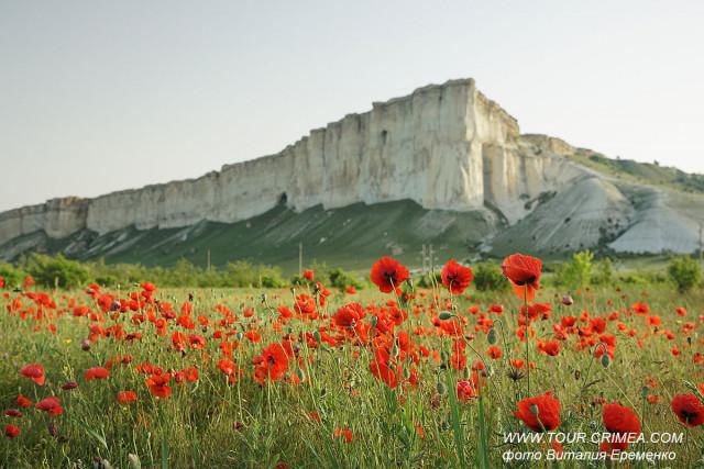Белая скала в маках или прекрасное утро фотографа-пейзажиста.