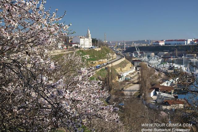 Сладкий аромат крымского миндаля. Весна 2020 г.
