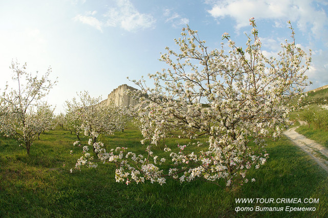 Цветущий яблоневый сад у подножия Белой скалы. Прекрасный вечер после майского дождя.