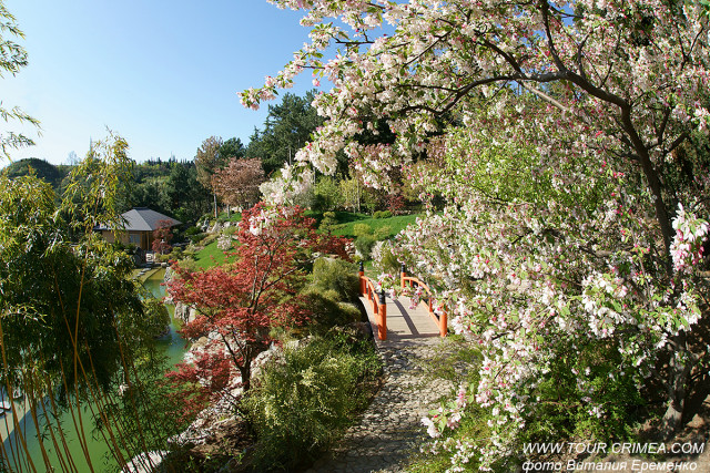 На пороге - весна!!!!!!!!!!  Нежность и Красота! Крым!