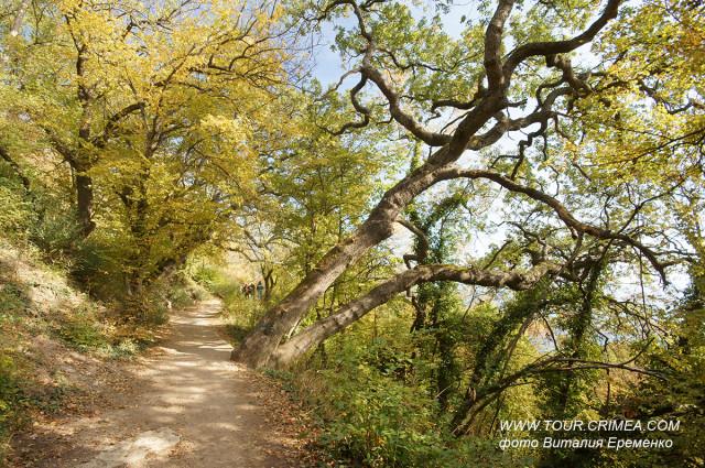 Осенняя прогулка по Солнечной тропе.