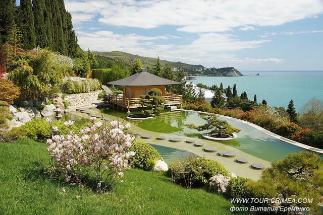 """Райская весна в Японском саду санатория """"Айвазовское"""". Цветущая сакура."""