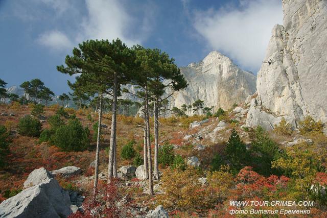 Волшебство по-крымски, или туманы и солнце у горы Шаан-Кая над Алупкой.