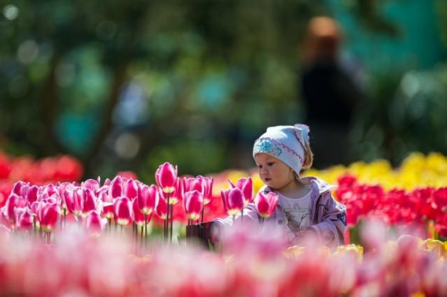 В Никитском саду стартовал Парад тюльпанов