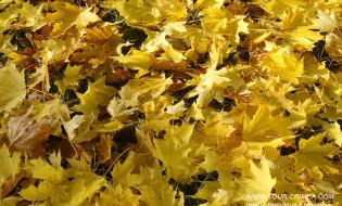Пошуршать облетевшей золотой листвой... Погреться на солнышке в теплом Крыму...