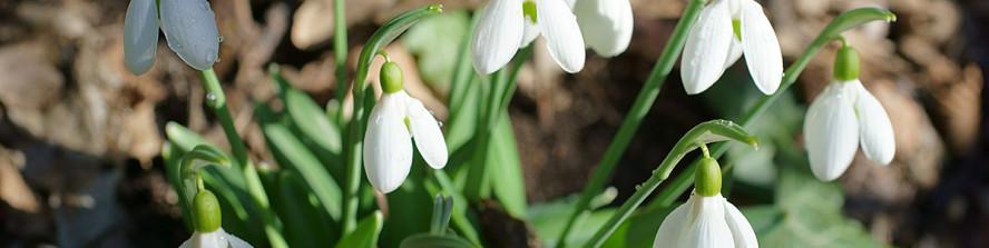 Скоро наступит весна!