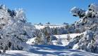 В новогодние праздники гора Ай-Петри стала излюбленным местом для зимнего отдыха туристов