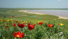 Тюльпаны Кояшского озера. Заповедник мыс Опук.  Берегите уникальную природу Крыма, не рвите дикие цветы! Фоторепортаж.