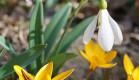 В ожидании чуда весны. Теплые деньки крымского февраля 2020г.