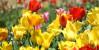 Поздравляем с праздником весны 8 марта, наши любимые женщины!